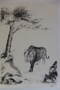 Vieux Tigre