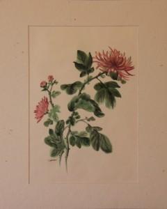 Les chrysanthèmes (x4)